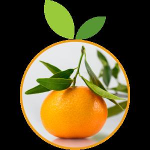Mandarine Ciaculli