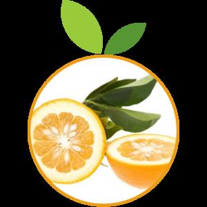 Orange Amères